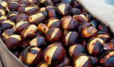 Chestnuts in Turkey:  116 million US Dollars in 2002 as a non-wood forest product
